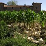 Antica Corte Pallavicina - Azienda Agricola